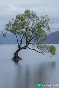 #thatwanakatree #wanaka #lakewanaka #nz #newzealand #mustdo #holiday #JustNewZealand Wanaka New Zealand, Lake Wanaka, River, Holiday, Outdoor, Outdoors, Vacations, Holidays, Outdoor Games