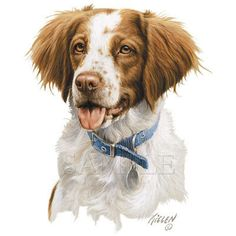 BRITTANY Dog on One 18 x 22 inch  Fabric Panel for Quilting and Sewing. $13.99, via Etsy.