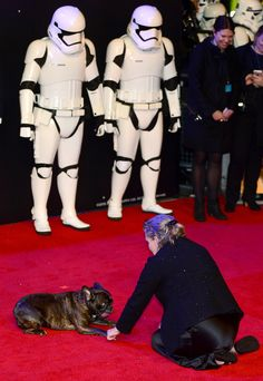 Carrie Fisher with Gary Storm Troopers London premiere Carrie Fisher Billie Lourd, Star Wars Episode 4, Episode Vii, Debbie Reynolds Carrie Fisher, Gary Fisher, Hooray For Hollywood, Star Wars Baby, The Force Is Strong, A New Hope
