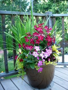 Red nicotiana deck pot