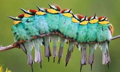 Thought this was a caterpillar at first