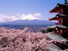 pics of japan | Fuji Japan Mount Cherry Blossoms