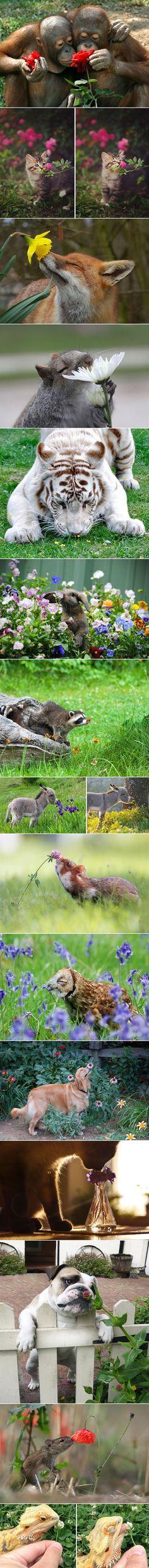 diertjes met bloemetjes