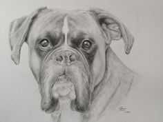 Bleistift Zeichnung in A4 Boxer, Pencil, Dogs, Animals, Art, Product Design, Drawing S, Animais, Craft Art