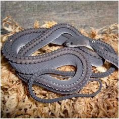A rare glimpse of one of the worlds most elusive and spectacular snakes, the Dragon Snake(Xenodermus javanicus).
