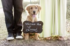 Maternity photos with dog. Golden retriever puppy. @JessicaFraserPhotography