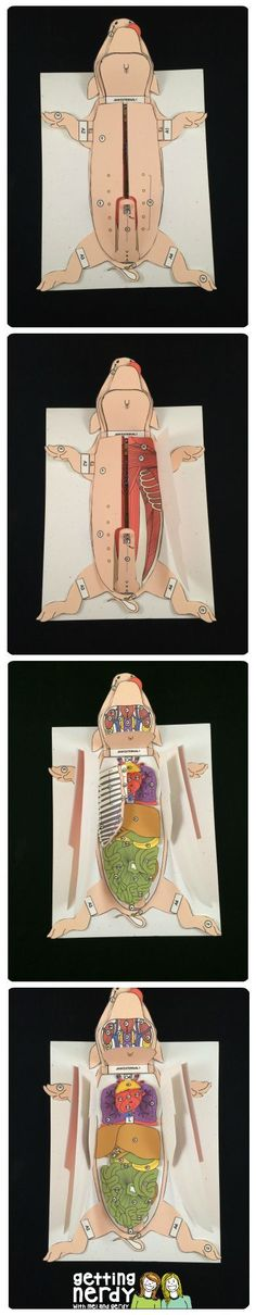 Blog post: Why you should use 3-d paper dissection models in life science and biology - fetal pig