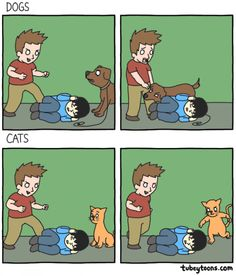 Cats VS dogs. #imgur