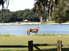 <3 <3 <3 Enjoy this little piece of heaven, sipping coffee on the porch while watching your horses graze by the lake.