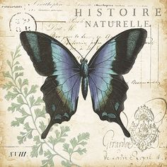 RB6824TS_Butterfly_Histoire_Naturelle_I_18x18.jpg