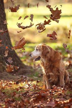 Beautiful old friend enjoying the leaves....