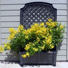 I pinned this Calypso Square Planter from the Green Thumb event at Joss and Main!