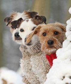 3 dogs in winter - a pure classic photo