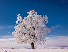 winter by Marius Ciocan on 500px
