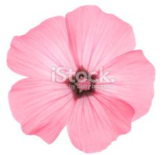 Flowers Stock Photos, Pictures & Images - iStock