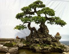 Cultivate Living Board Game --- Goal of Scale (Bonsai landscape when traveling and Table top map for indoor events)