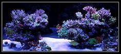 Nice Aquascape Reef tank 110g