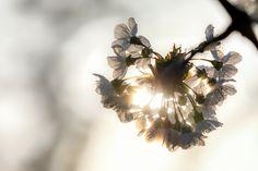 Fotograf Wolfgang TrustzeigtunsseinenBlickaufdasFrühlingserwachen#imländle. Viel Freude mit den Impressionen und den inspirierenden Frühlingszitaten.      Laß den Frühling rein in deine Träume, dann wachsen sie zu Taten. – Renate Wintergerst (*1954)      Am Waldrand zeigen die ersten Frühlingsboten ihr neues Programm. – Ernst Ferstl (*1955)    Nach den Wolken kommt die Sonne.   #FotografTrust #FrühlingaufderAlb #Frühl