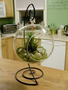 Air Plant Terrarium with Decorative Stand by SecondBreathDesigns Air Plant Terrarium, Garden Terrarium, Succulents Garden, Planting Flowers, Air Plants, Indoor Plants, Miniature Greenhouse, Decoration Plante, Cactus Flower
