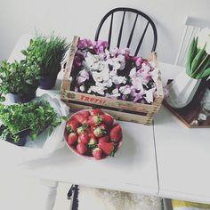 Eine Kiste Frühling  und noch bisschen Grünzeug aka Selbstversorgung und so Happy Sunday ️  #balkon #blooms #erdbeeren #Fischmarkt #fischmarkteinkauf #flower #flowers #Frühling #frühlinginhamburg #frühlingsfit #grünzeug #Hamburg #hh #home #kistefrühling #kitchen #myhome #pflanzen #plante #table