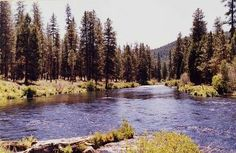 Metolius River  United States / Sisters, Oregon Location ID: #10000903