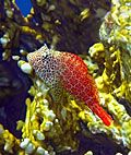 Koraalriffen - Rode Zee, Koraalriffen - Rode Zee foto's, Koraalriffen - Rode Zee fotografie