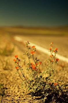 Roadside flowers | Flickr - Fotosharing!