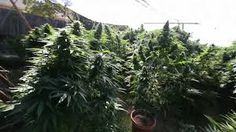 access to medical marijuana without visiting a dispensary