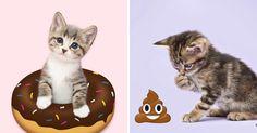 Emoji Kittens: They Photograph Kittens In A Unique Way https://plus.google.com/+KevinGreenFixedOpsGenius/posts/AjJzAWsfbdd