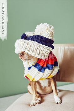 Shop winter accessories at Anthropologie Winter Accessories, Dog Accessories, Best Gifts Under 50, Puppies And Kitties, Animal Photography, Puppy Love, Animal Pictures, Fur Babies, Dog Cat