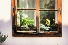 Little greenhouse from Sighisoara, Romania.
