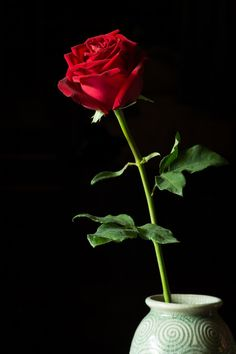 Single red rose in vase isolated on black.