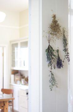 - hanging // herbs -