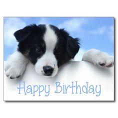 Happy Birthday Border Collie Puppy Dog Post Card