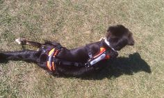 My new harness.