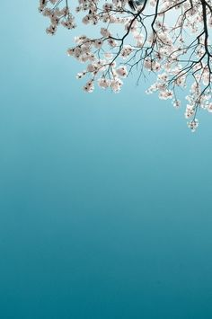 Sky and blossom