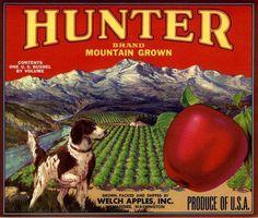 Wenatchee, Washington Hunter Pointer Dog  Apple Crate Label Art Print