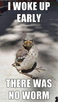 Early bird didn't catch worm Birds, Early, Funny, Funny Bird, Morning