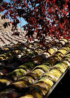 French Roof