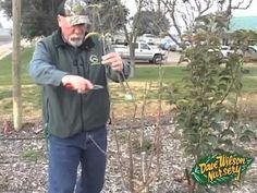 Winter Fruit Tree Pruning 2013