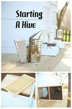 How To Start A Honey Bee Hive Plans, Beekeeping Tips. Direct to instructions… Permaculture, Honey Bee Hives, Honey Bees, Bee Hive Plans, Beekeeping For Beginners, Raising Bees, Buzz Bee, Backyard Beekeeping, Bee Friendly