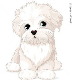 Maltese Puppy Do #maltese Puppy Dog