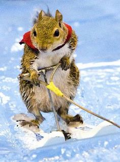 Yes, it's the water skiing squirrel
