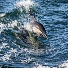 Tigh an Phoist Bóthar Buí, Dingle, Co Kerry (Sleeps 1 - UK, Ireland. Self Catering. Underwater Animals, Irish Cottage, Its A Wonderful Life, Sea Creatures, High Quality Images, Dolphins, Free Photos, Find Image, Whale