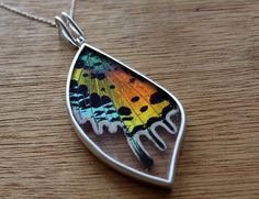 Real butterfly wing necklace - Real butterfly necklace - silver butterfly necklace - real butterfly - Sunset moth necklace - wing shape by SilverTemptation on Etsy