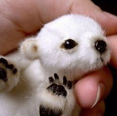 Baby Polar Bear - Did you know they are the size of a Beanie Baby when they are born and only weight 1-lb?