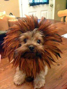 So adorable to cute not to share this #cutepuppy is all dressed up for #Halloween. Excellent #pet #costume ideas for your pet