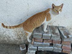 オマーン・マスカットの猫さん