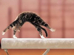 "Gymnastics. KittyCommotion.com says, ""I vote for a cat Olympics!"""