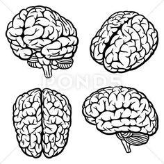 Illustration about Human Brain. Illustration of idea, background, smart - 27567444 Brain Anatomy, Anatomy Art, Anatomy Drawing, Brain Vector, Human Vector, Brain Tattoo, Brain Illustration, Brain Art, Brain And Heart